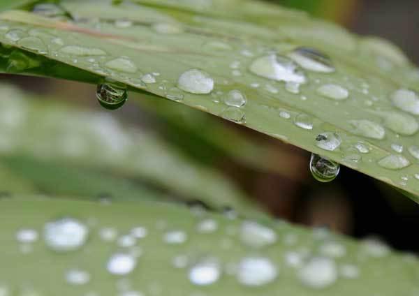 雨の雫_c0404426_16060372.jpg