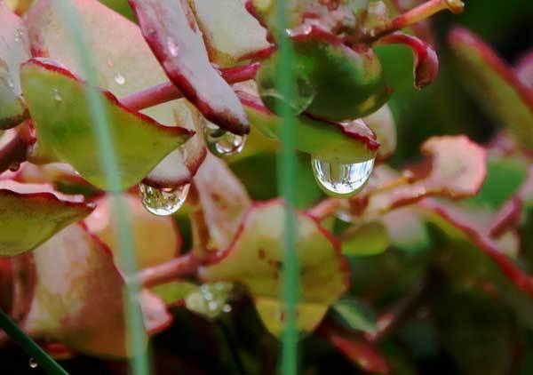 雨の雫_c0404426_16063808.jpg