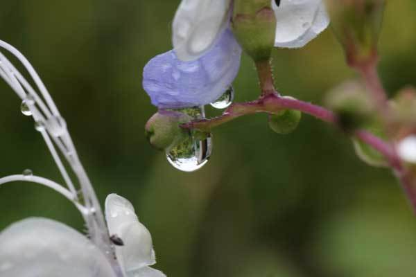 雨の雫_c0404426_16090816.jpg