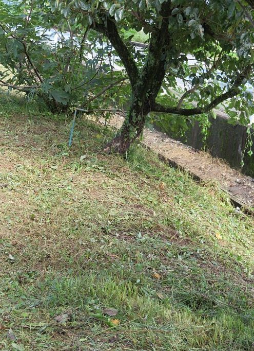 2021年9月18日 草刈り作業  !(^^)!_b0341140_06544280.jpg