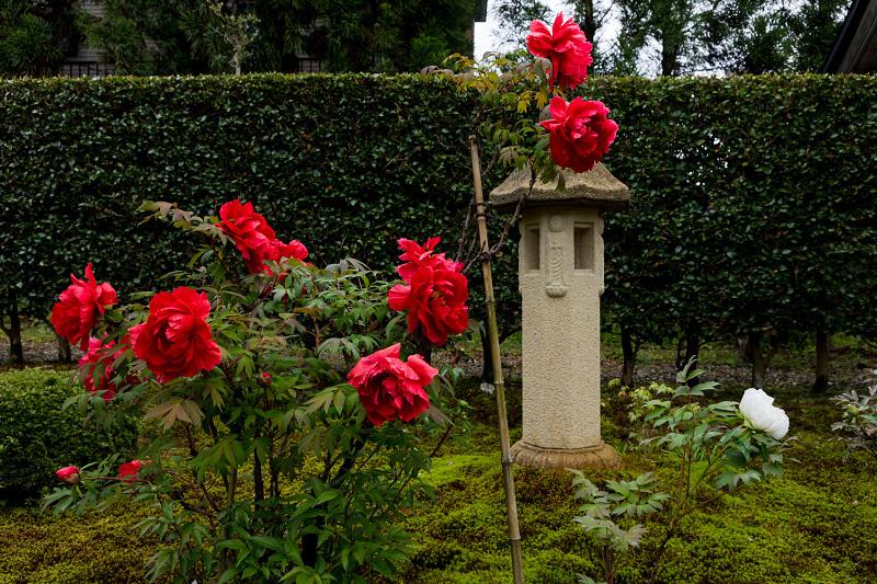 Finale! 2021桜咲く京都 圓光寺の八重桜たちと新緑_f0155048_23483382.jpg