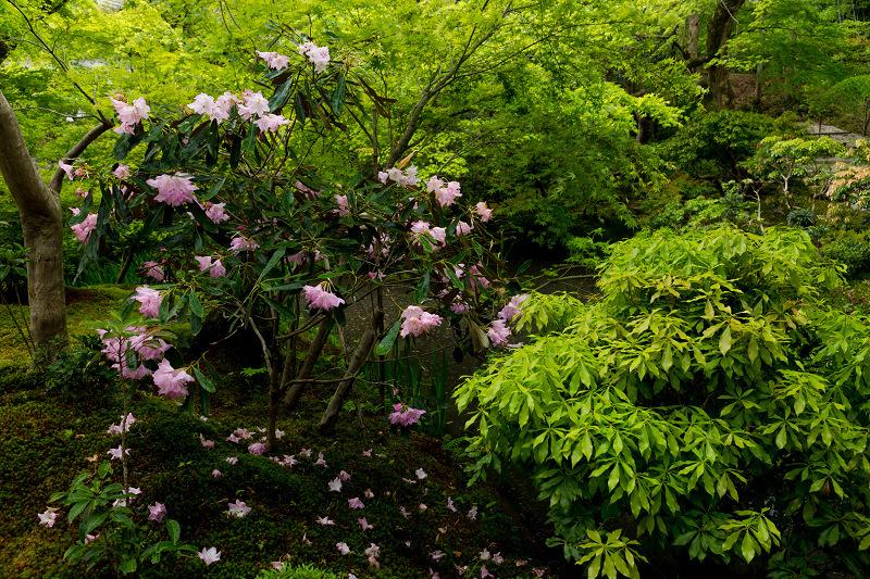 Finale! 2021桜咲く京都 圓光寺の八重桜たちと新緑_f0155048_23492477.jpg