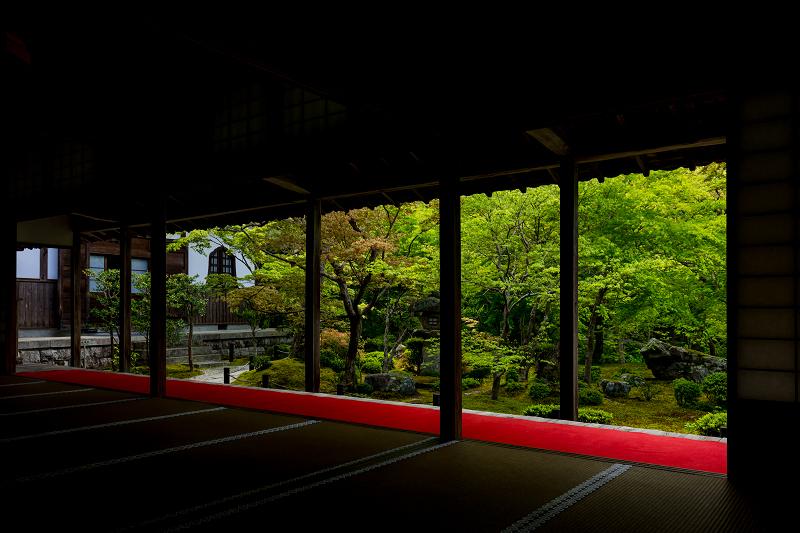 Finale! 2021桜咲く京都 圓光寺の八重桜たちと新緑_f0155048_23502081.jpg