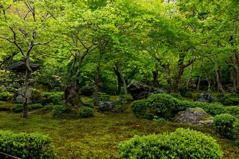 Finale! 2021桜咲く京都 圓光寺の八重桜たちと新緑_f0155048_23502936.jpg
