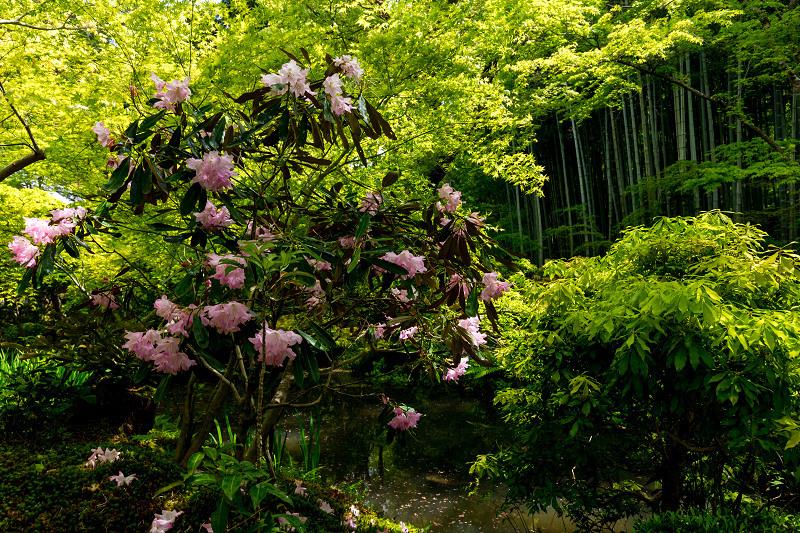 Finale! 2021桜咲く京都 圓光寺の八重桜たちと新緑_f0155048_23510514.jpg