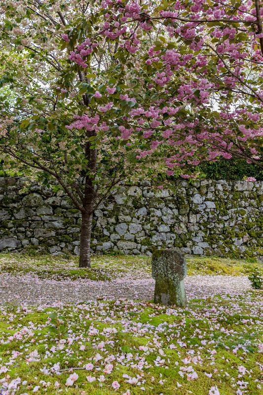 Finale! 2021桜咲く京都 圓光寺の八重桜たちと新緑_f0155048_23515266.jpg