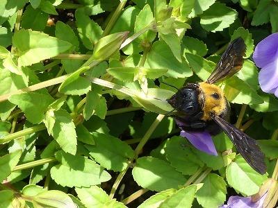 蜜をもらう3つのスタイル_d0384190_13392464.jpg