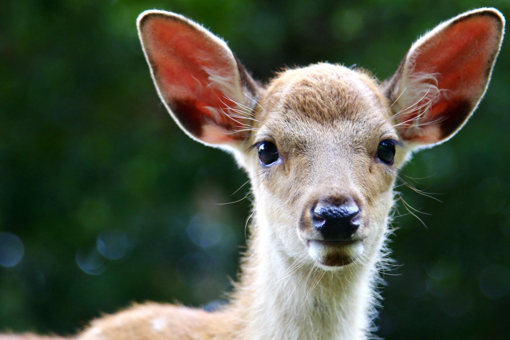 Deer Park 2021.8.15 NaraPark 115_e0237623_00124599.jpg