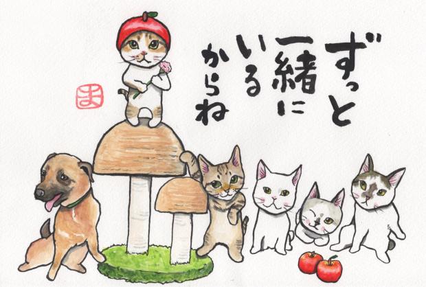 うみちゃん マスク猫 譲渡会のお知らせ_f0375804_19281188.jpg