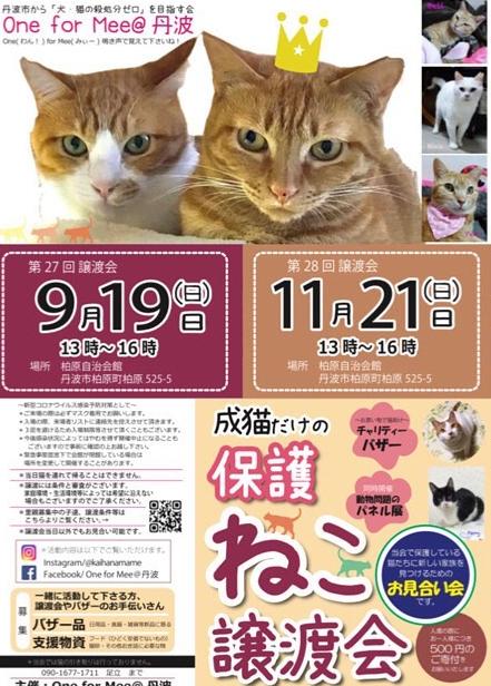 うみちゃん マスク猫 譲渡会のお知らせ_f0375804_20162338.jpg