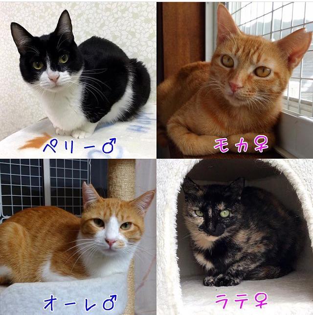 うみちゃん マスク猫 譲渡会のお知らせ_f0375804_20162640.jpg