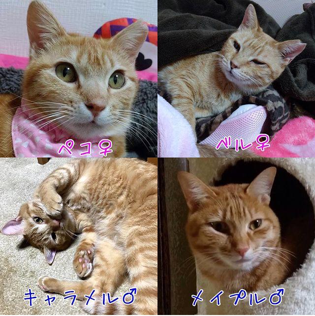 うみちゃん マスク猫 譲渡会のお知らせ_f0375804_20162731.jpg