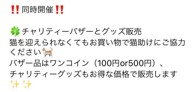 うみちゃん マスク猫 譲渡会のお知らせ_f0375804_20182362.jpg