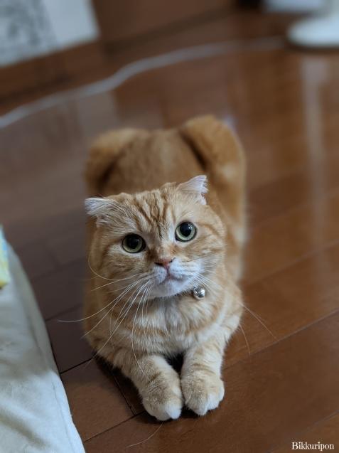 猫の機嫌 良い時悪い時_d0344913_07403520.jpg