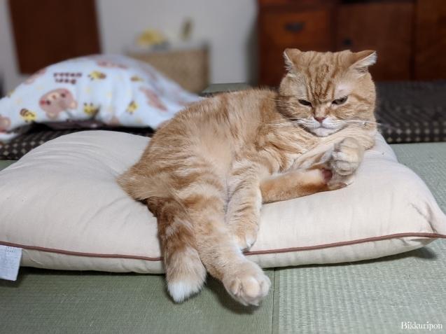 猫の機嫌 良い時悪い時_d0344913_07410393.jpg
