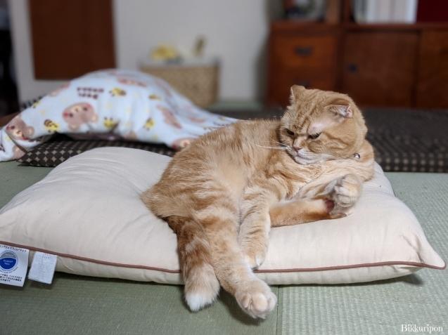 猫の機嫌 良い時悪い時_d0344913_07461147.jpg