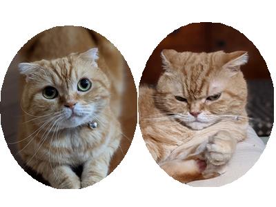 猫の機嫌 良い時悪い時_d0344913_08040605.png
