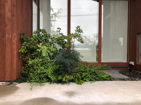 HOUSE-HUU 追加植栽_c0112447_07392692.jpg
