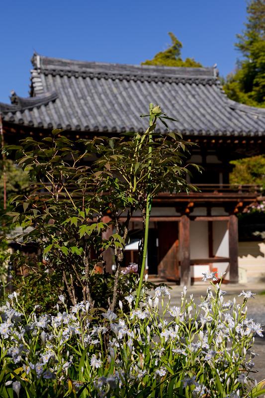 石楠花と春の花咲く岡寺_f0155048_23031989.jpg