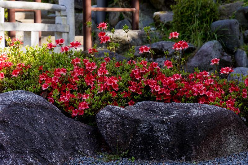 石楠花と春の花咲く岡寺_f0155048_23032354.jpg