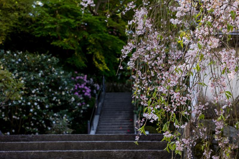 石楠花と春の花咲く岡寺_f0155048_23040009.jpg