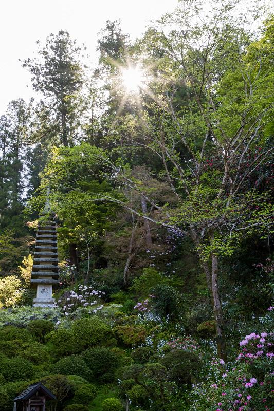 石楠花と春の花咲く岡寺_f0155048_23042563.jpg