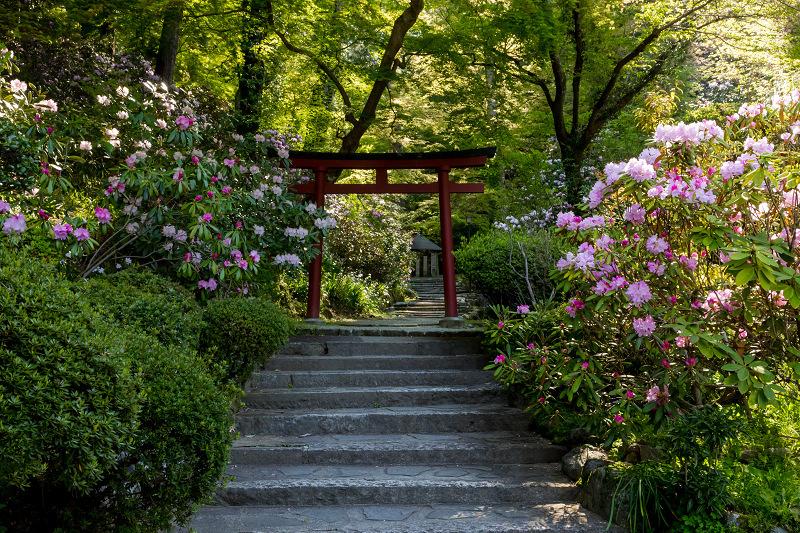 石楠花と春の花咲く岡寺_f0155048_23044147.jpg