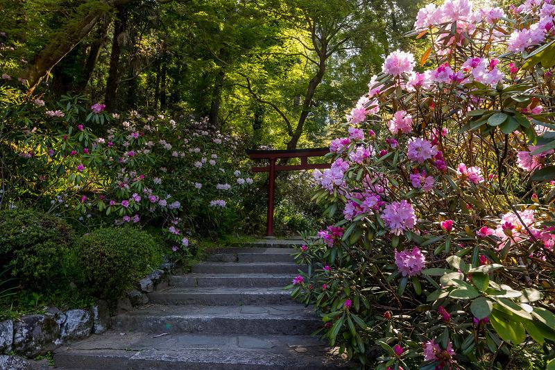 石楠花と春の花咲く岡寺_f0155048_23044952.jpg