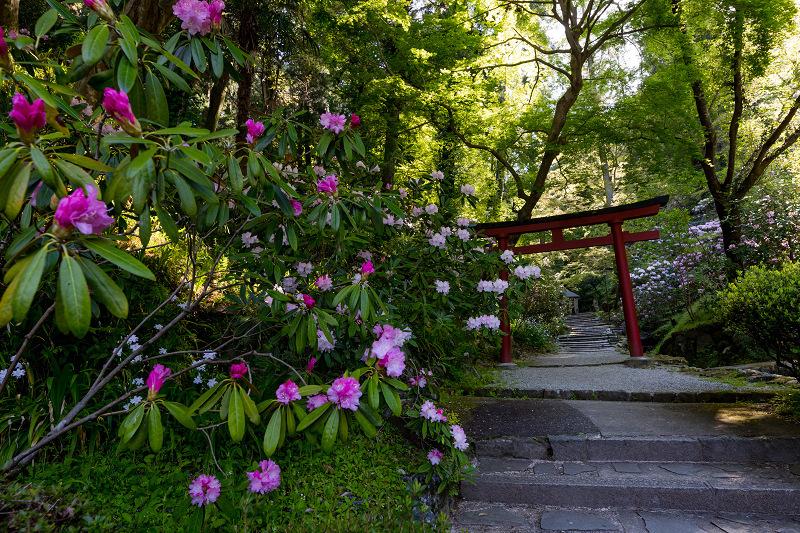 石楠花と春の花咲く岡寺_f0155048_23052774.jpg