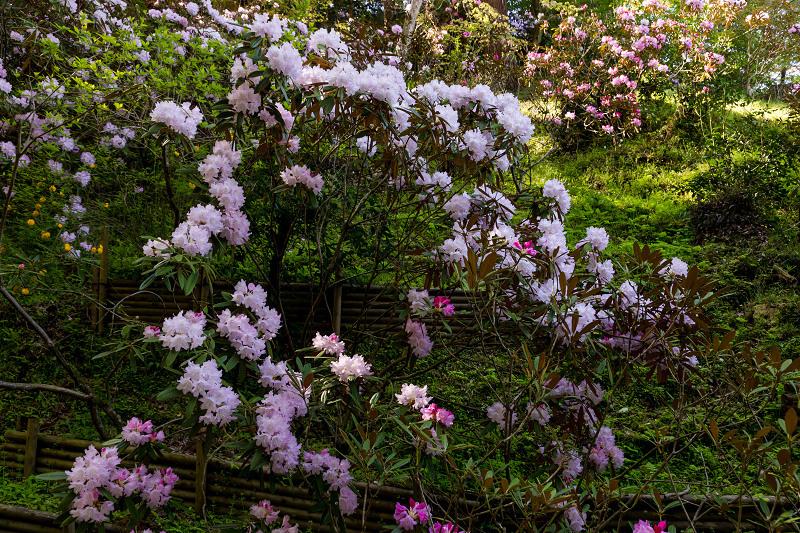 石楠花と春の花咲く岡寺_f0155048_23060450.jpg