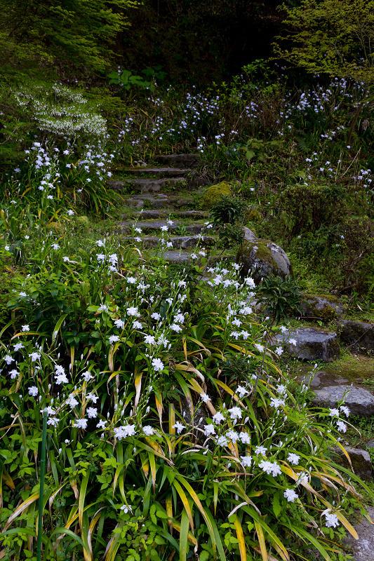 石楠花と春の花咲く岡寺_f0155048_23075759.jpg