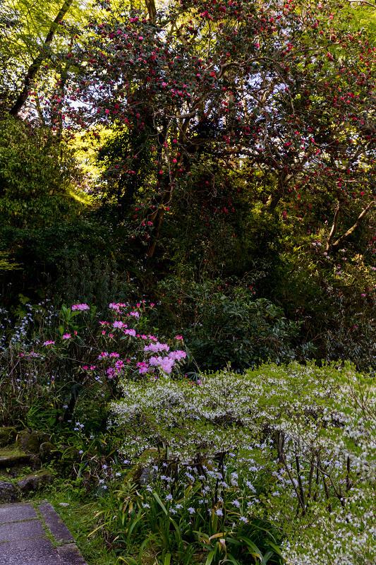 石楠花と春の花咲く岡寺_f0155048_23085770.jpg