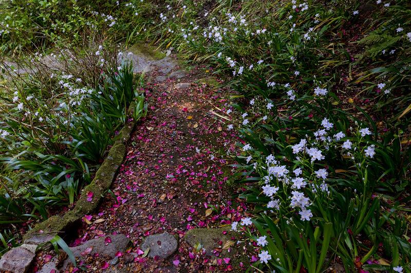 石楠花と春の花咲く岡寺_f0155048_23091689.jpg