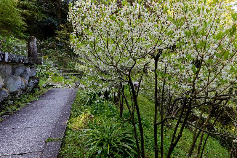 石楠花と春の花咲く岡寺_f0155048_23092006.jpg