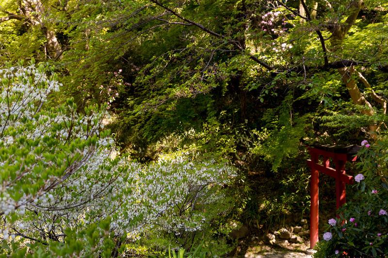 石楠花と春の花咲く岡寺_f0155048_23094457.jpg
