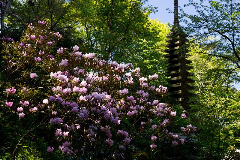 石楠花と春の花咲く岡寺_f0155048_23104504.jpg