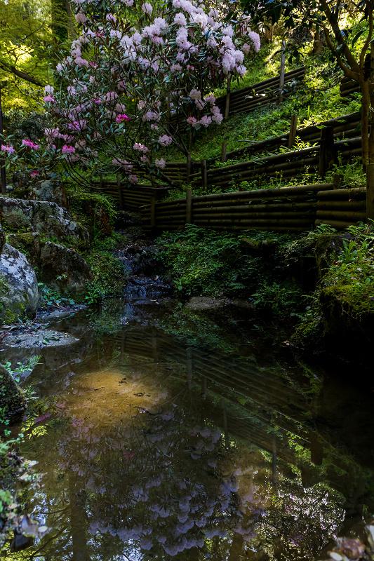 石楠花と春の花咲く岡寺_f0155048_23105819.jpg