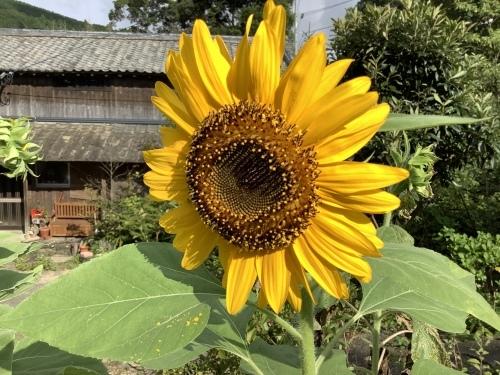 夏の名残りと秋の兆し_d0336460_17582460.jpeg