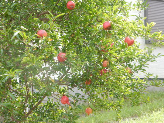'21,9,12(日)秋の実がいっぱい!とこの人は誰?_f0060461_09584506.jpg