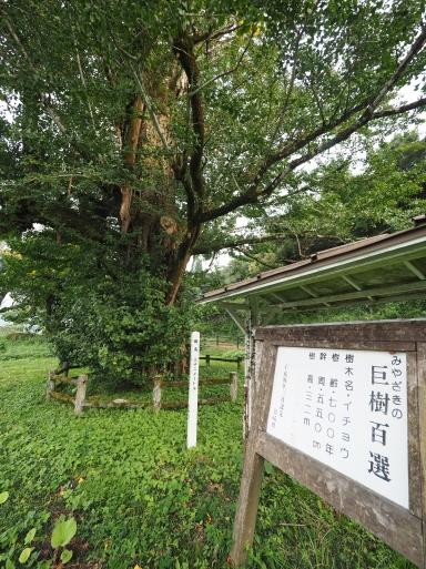 椎葉村へ その⑦_f0197985_17334652.jpg
