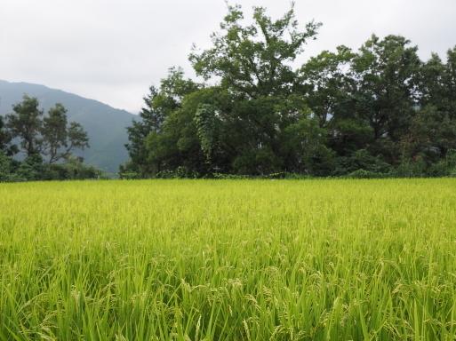 椎葉村へ その⑦_f0197985_17354191.jpg