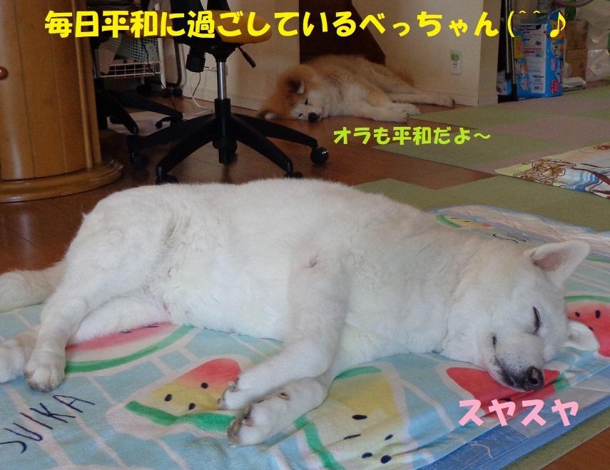 最近のべっちゃん_f0121712_13443359.jpg