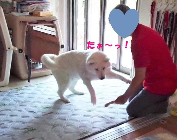 最近のべっちゃん_f0121712_13582233.jpg
