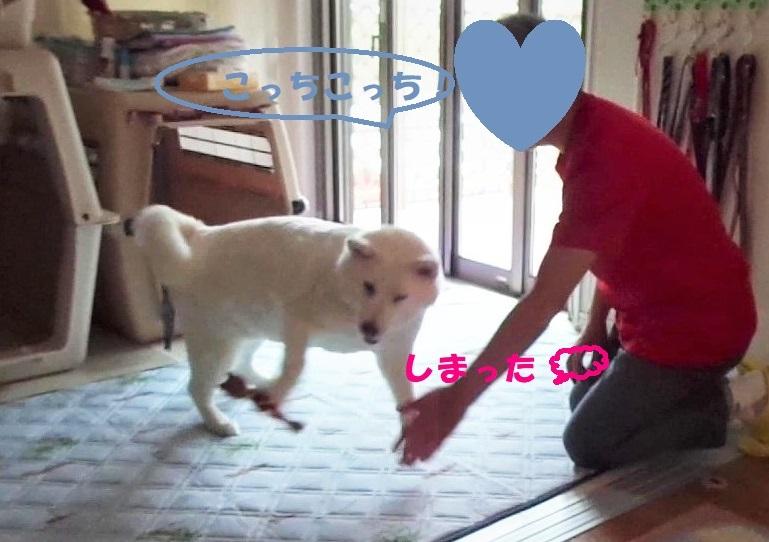 最近のべっちゃん_f0121712_14013550.jpg