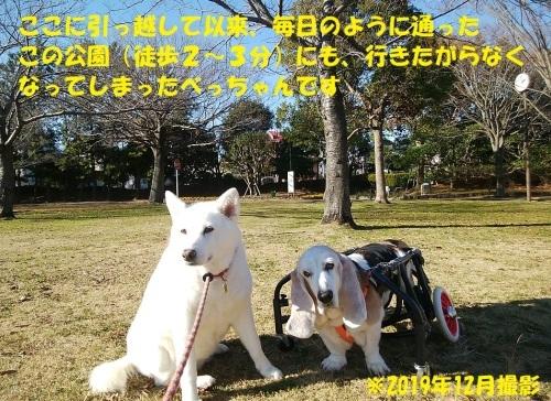 最近のべっちゃん_f0121712_14325333.jpg