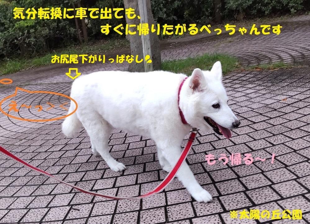最近のべっちゃん_f0121712_14504929.jpg