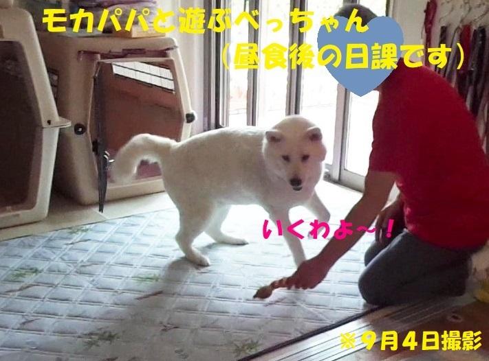最近のべっちゃん_f0121712_21502803.jpg