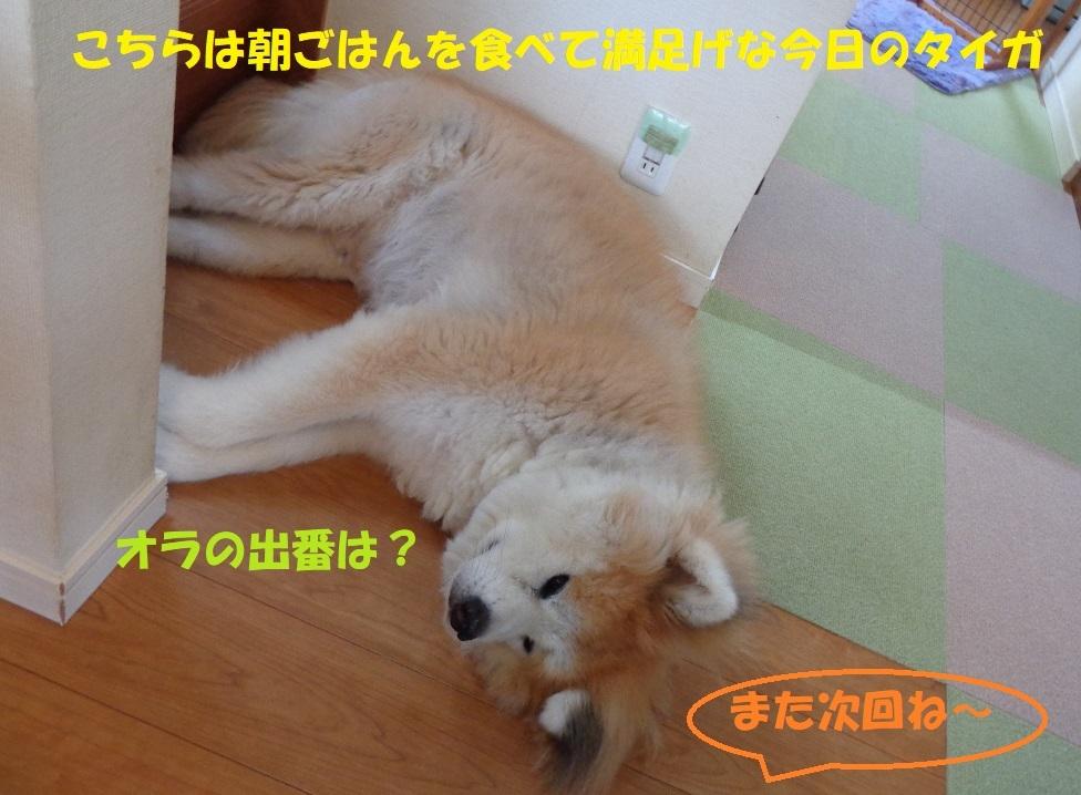 最近のべっちゃん_f0121712_22114506.jpg