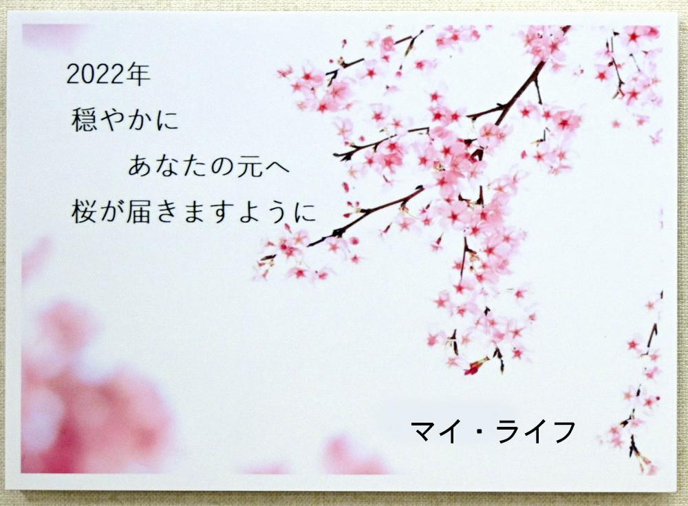マイライフさんのお花畑_d0265224_20332783.jpg
