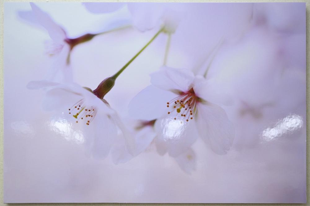 マイライフさんのお花畑_d0265224_20332844.jpg